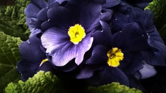 SophieLens_2015_02_15_14_58