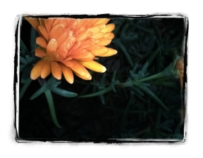 Phototastic-13_03_2015_ffa406e4-5227-4328-bece-194f9ed9b8af